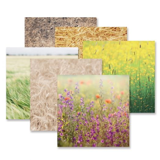 Creative Memories Mellow Meadows field papers for scrapbooking